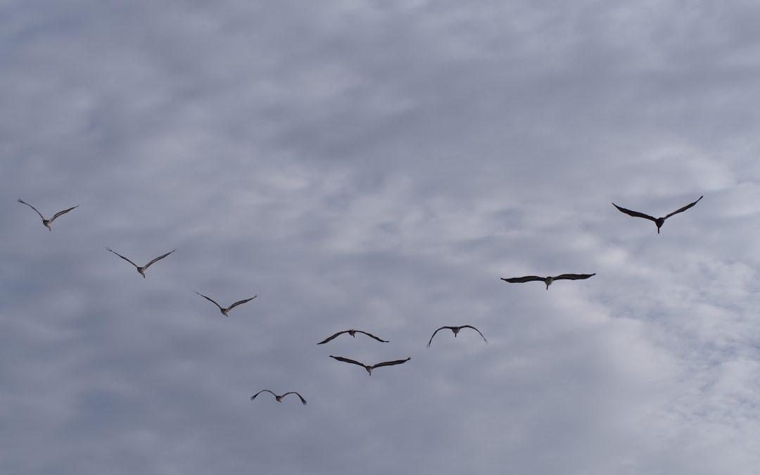 Kokeilun paikka! Lintuja tunnistamassa konenäön avulla