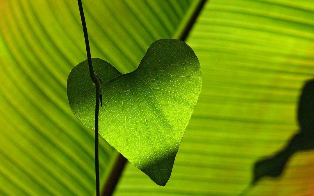 Rakkauden kemiaa Tiedeluokka SOLUssa