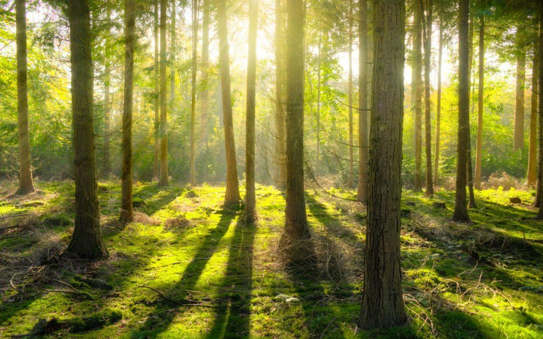 Metsäpohjainen piha paransi päiväkotilasten immuunijärjestelmää jo kuukaudessa