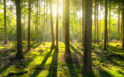 A forest-based yard improved the immune system of daycare children in only a month