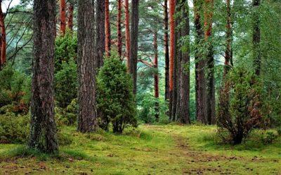 Metsä360-palkinnon ehdokkaiden etsintä on alkanut